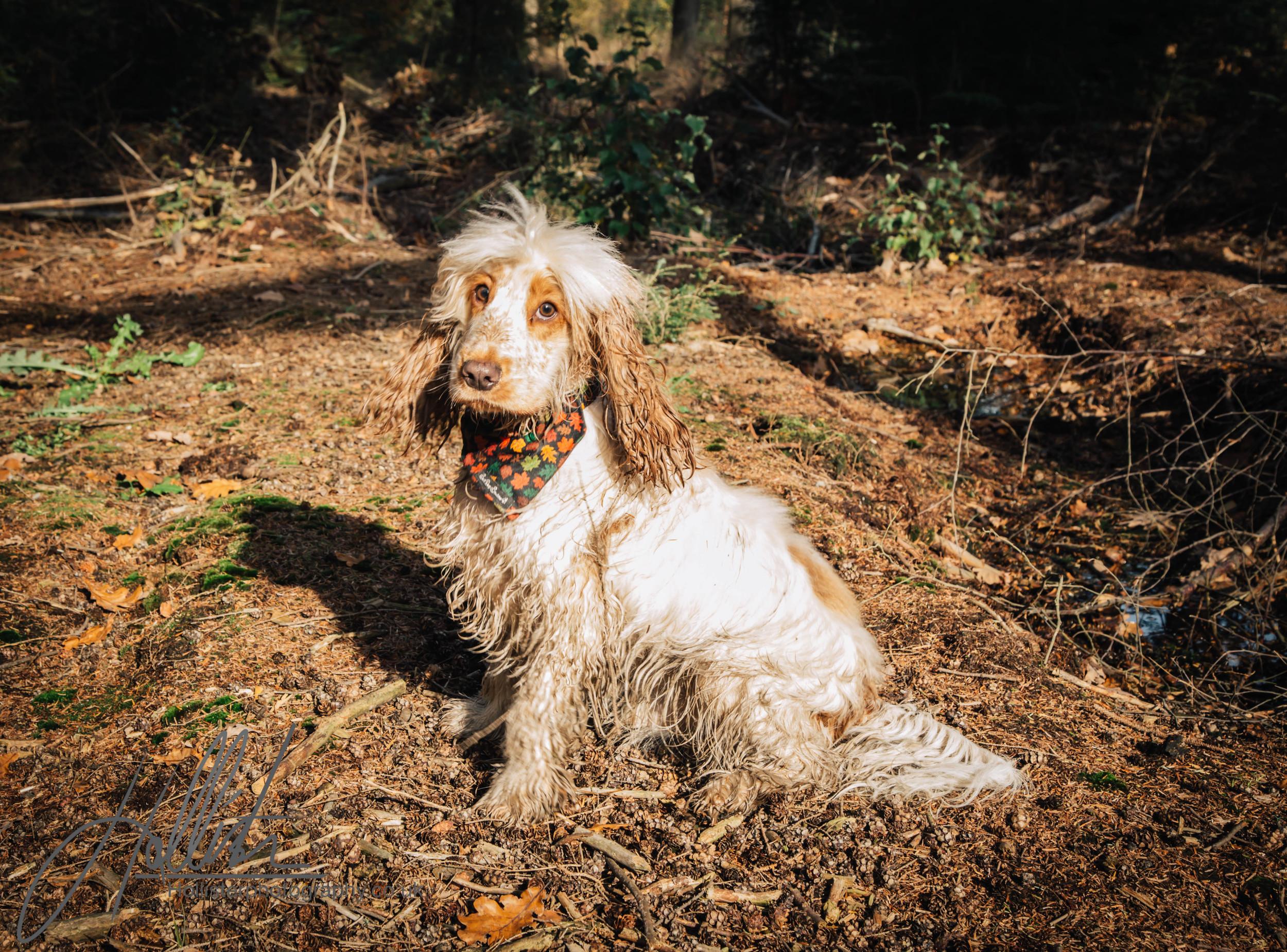 Hollisterphotography ABBY CLOWES WOOD DOG WALK-59.JPG