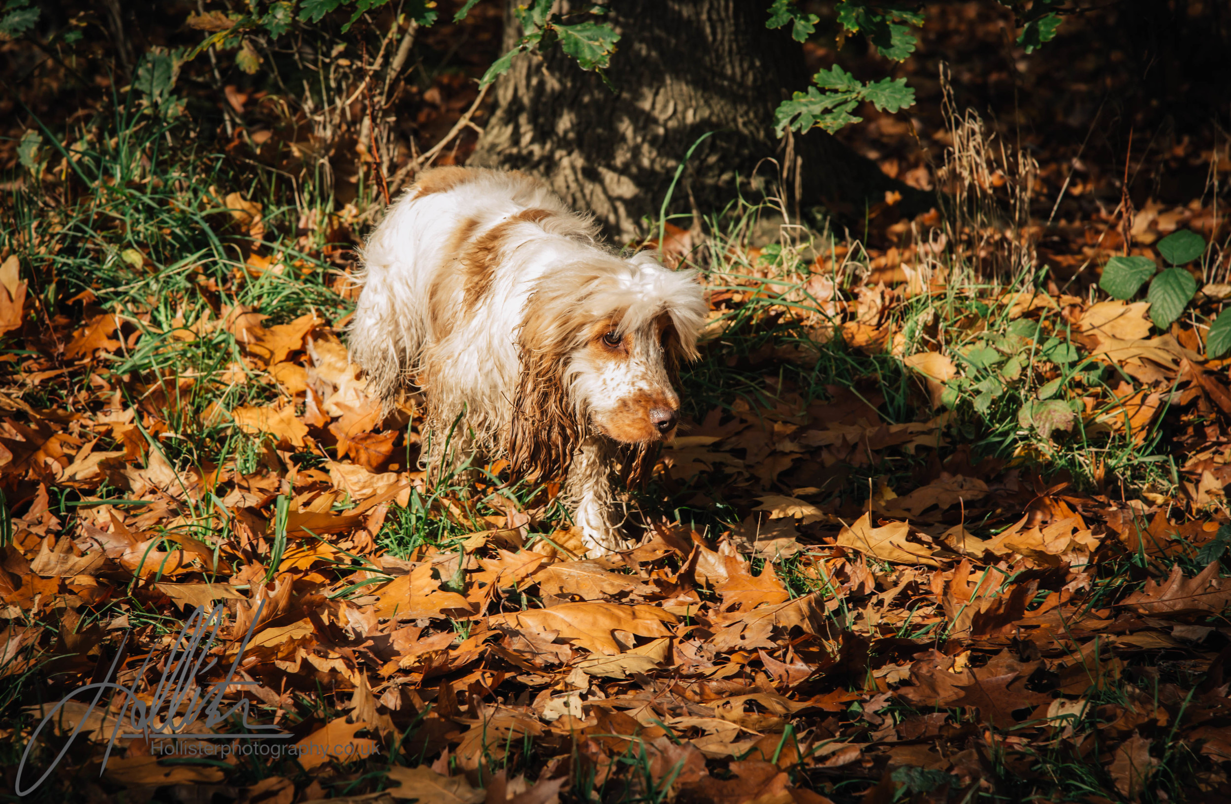 Hollisterphotography ABBY CLOWES WOOD DOG WALK-61.JPG