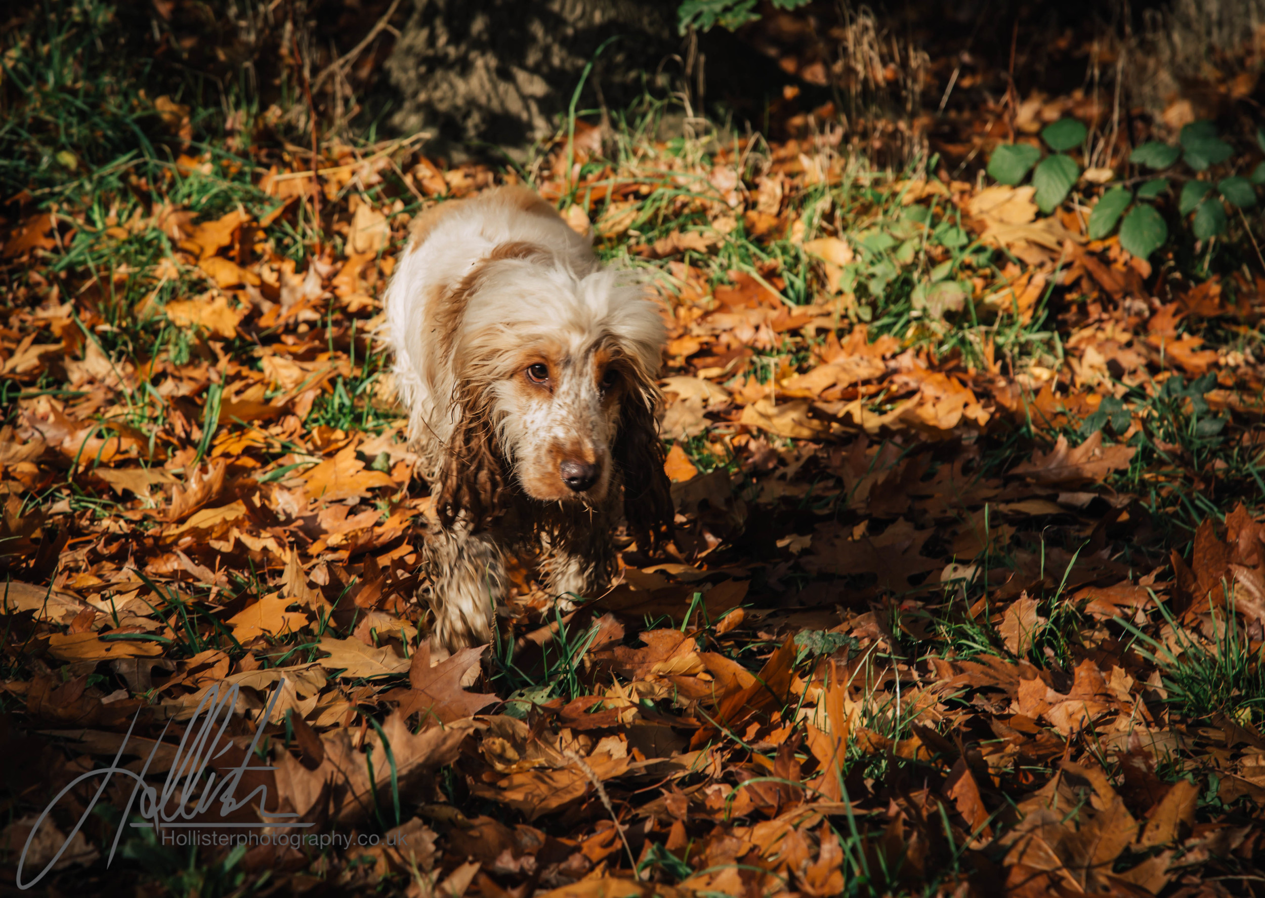 Hollisterphotography ABBY CLOWES WOOD DOG WALK-62.JPG