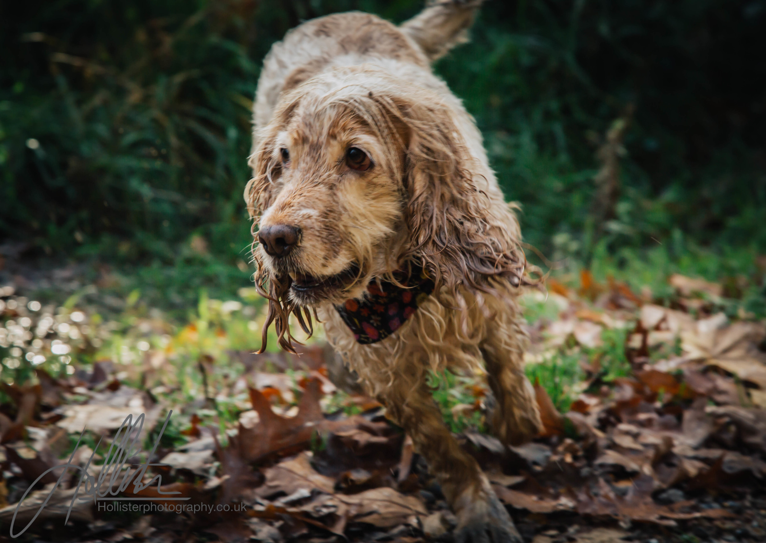 Hollisterphotography ABBY CLOWES WOOD DOG WALK-63.JPG