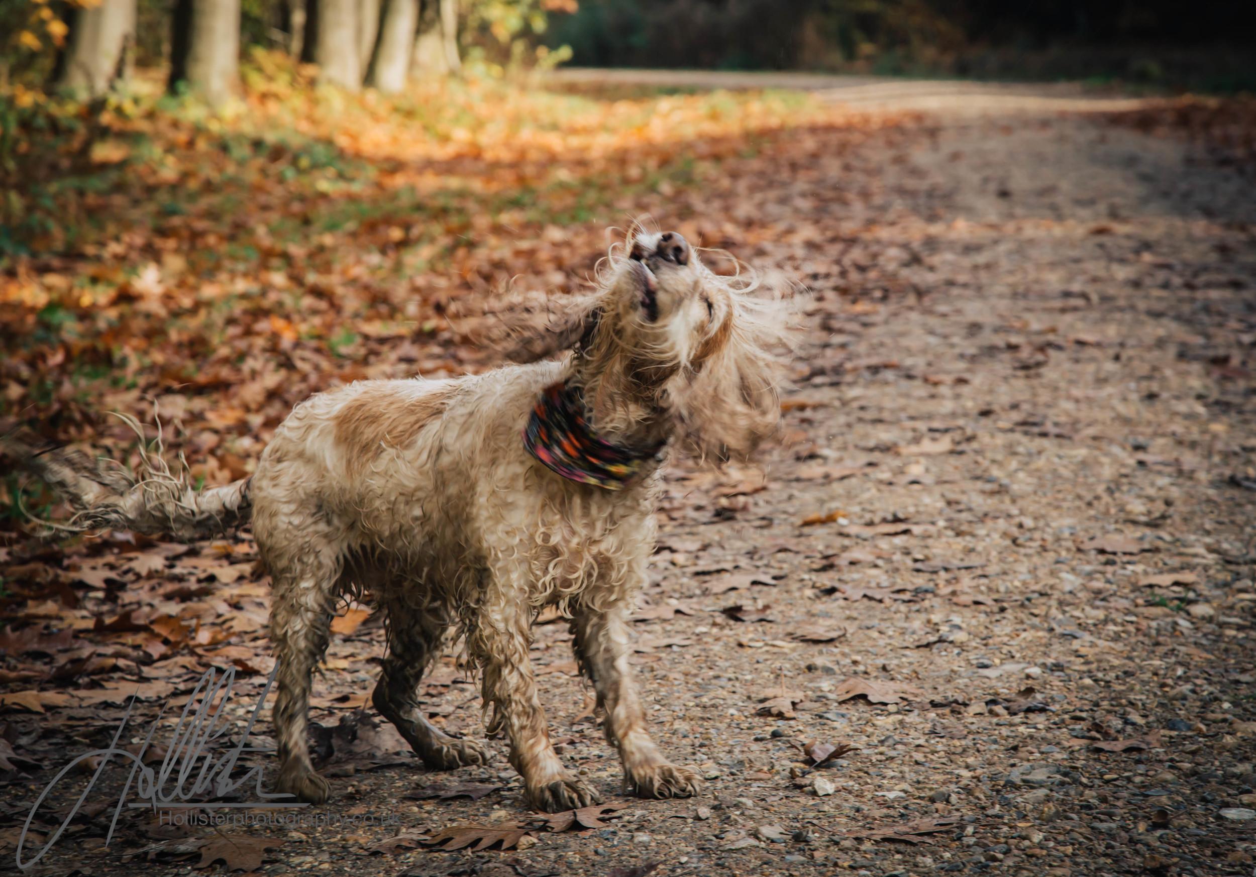Hollisterphotography ABBY CLOWES WOOD DOG WALK-64.JPG
