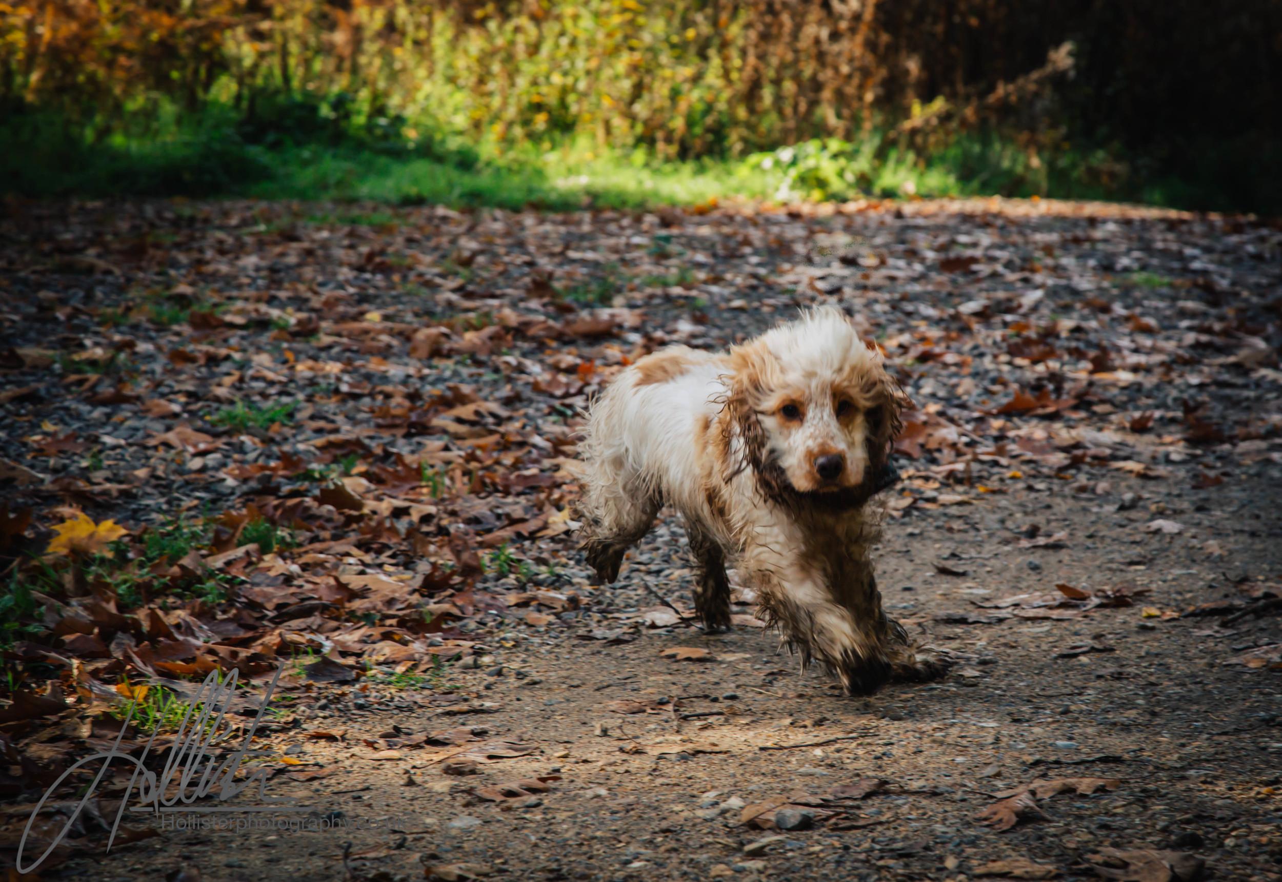 Hollisterphotography ABBY CLOWES WOOD DOG WALK-65.JPG