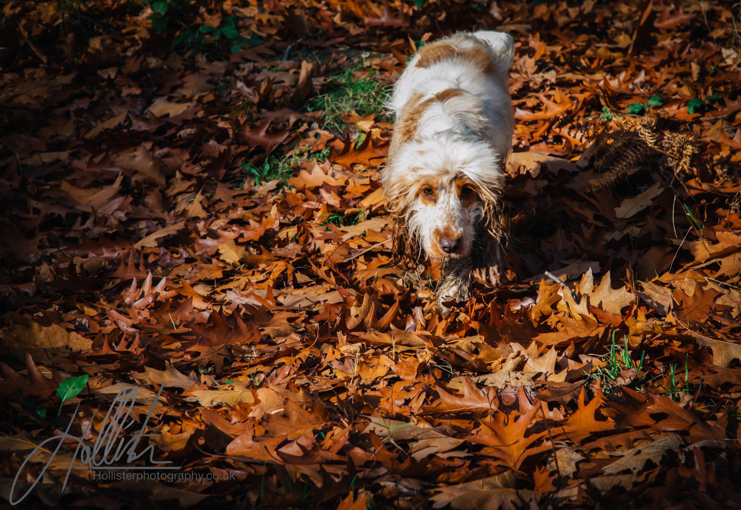 Hollisterphotography ABBY CLOWES WOOD DOG WALK-66.JPG