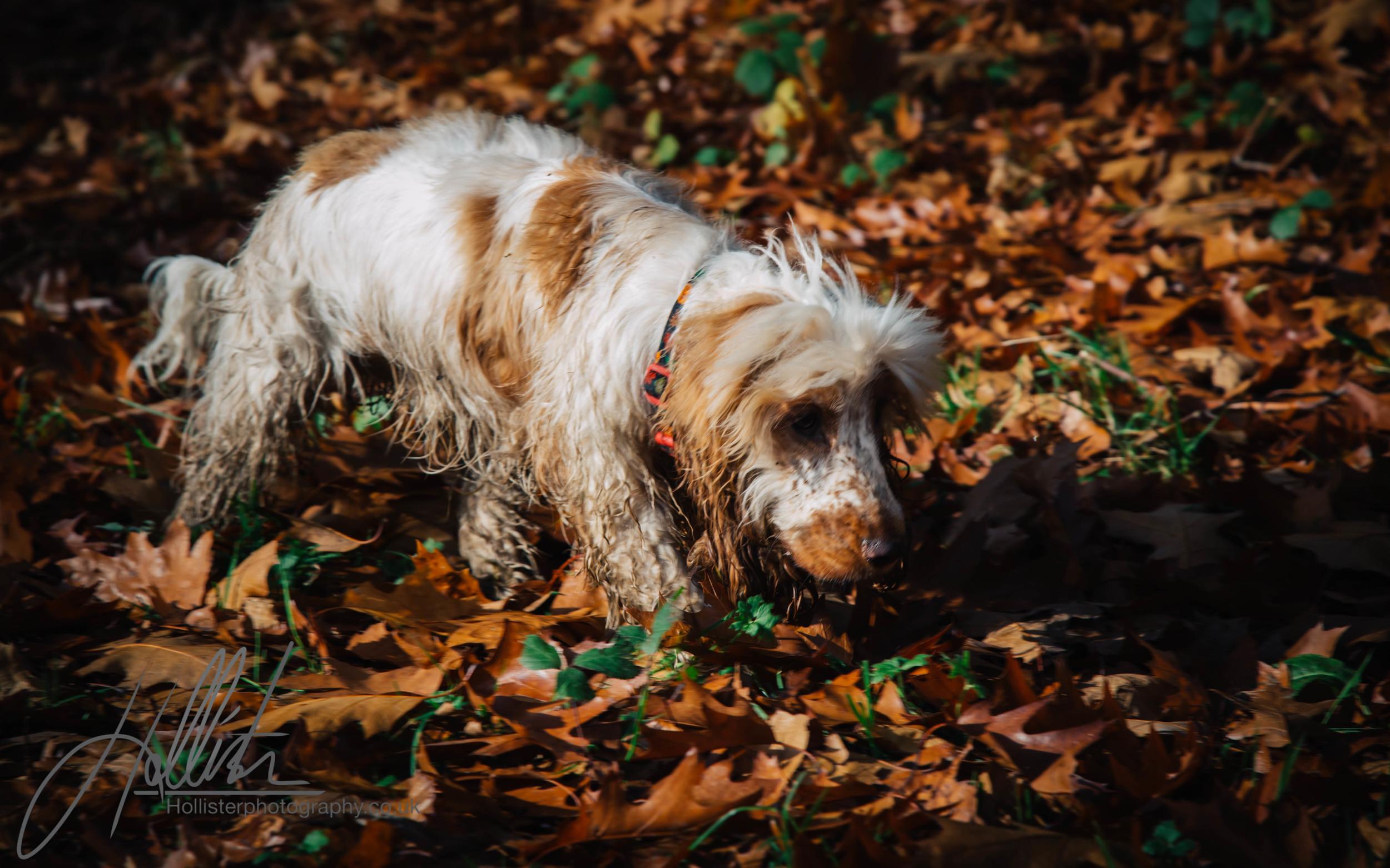 Hollisterphotography ABBY CLOWES WOOD DOG WALK-67.JPG