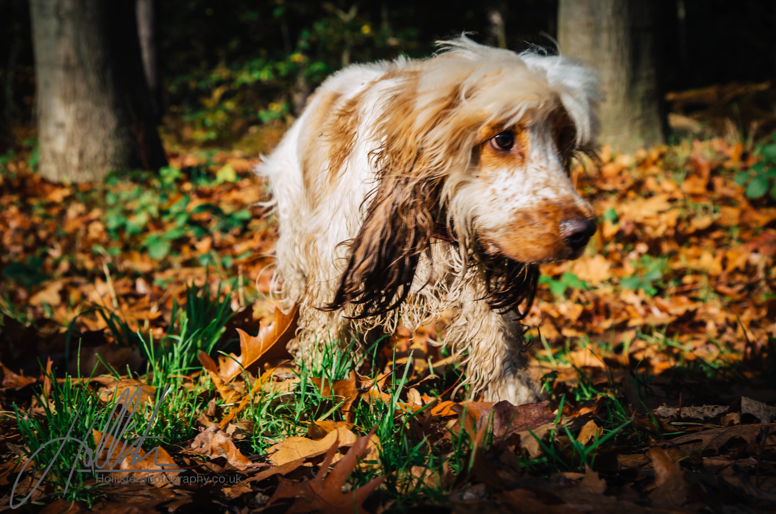 Hollisterphotography ABBY CLOWES WOOD DOG WALK-68.JPG