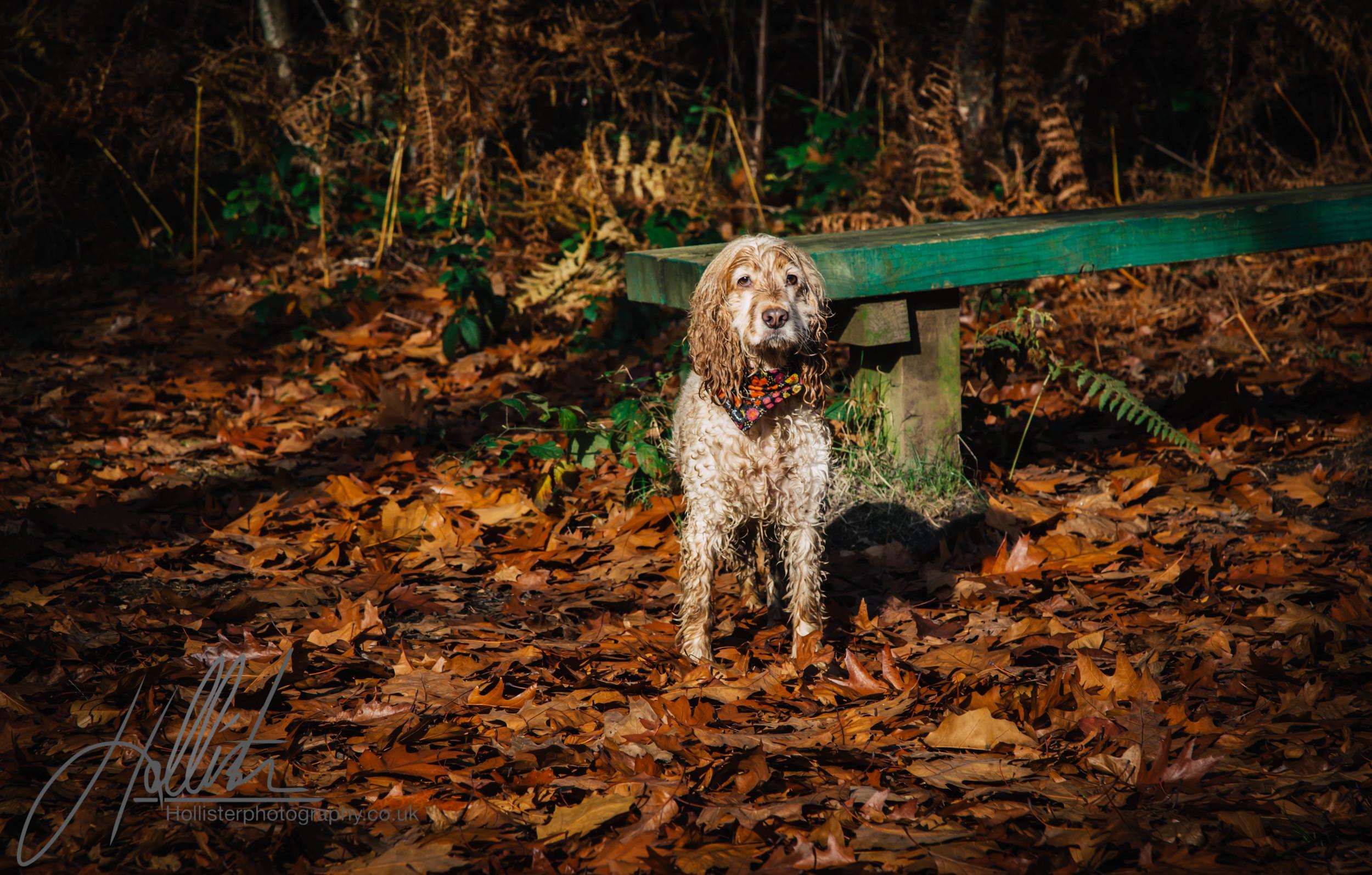 Hollisterphotography ABBY CLOWES WOOD DOG WALK-69.JPG