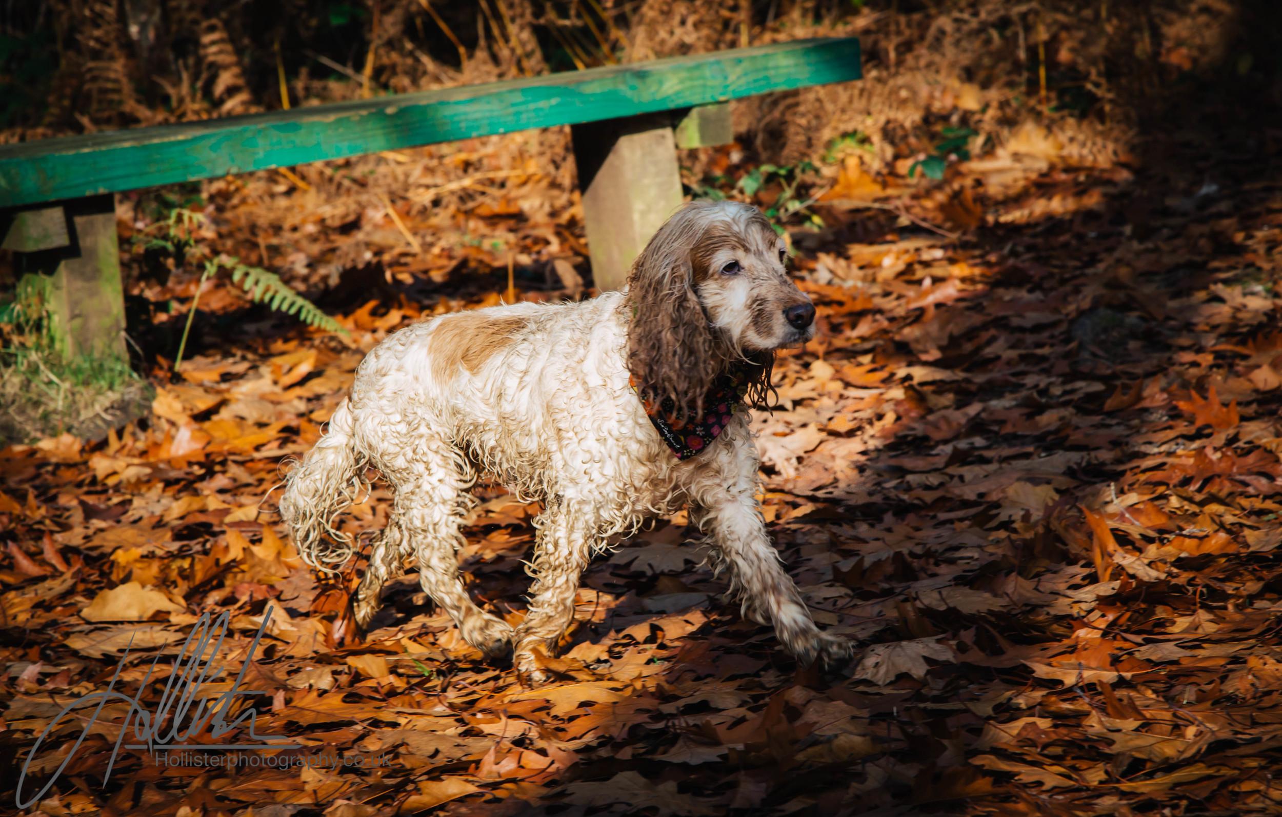 Hollisterphotography ABBY CLOWES WOOD DOG WALK-71.JPG