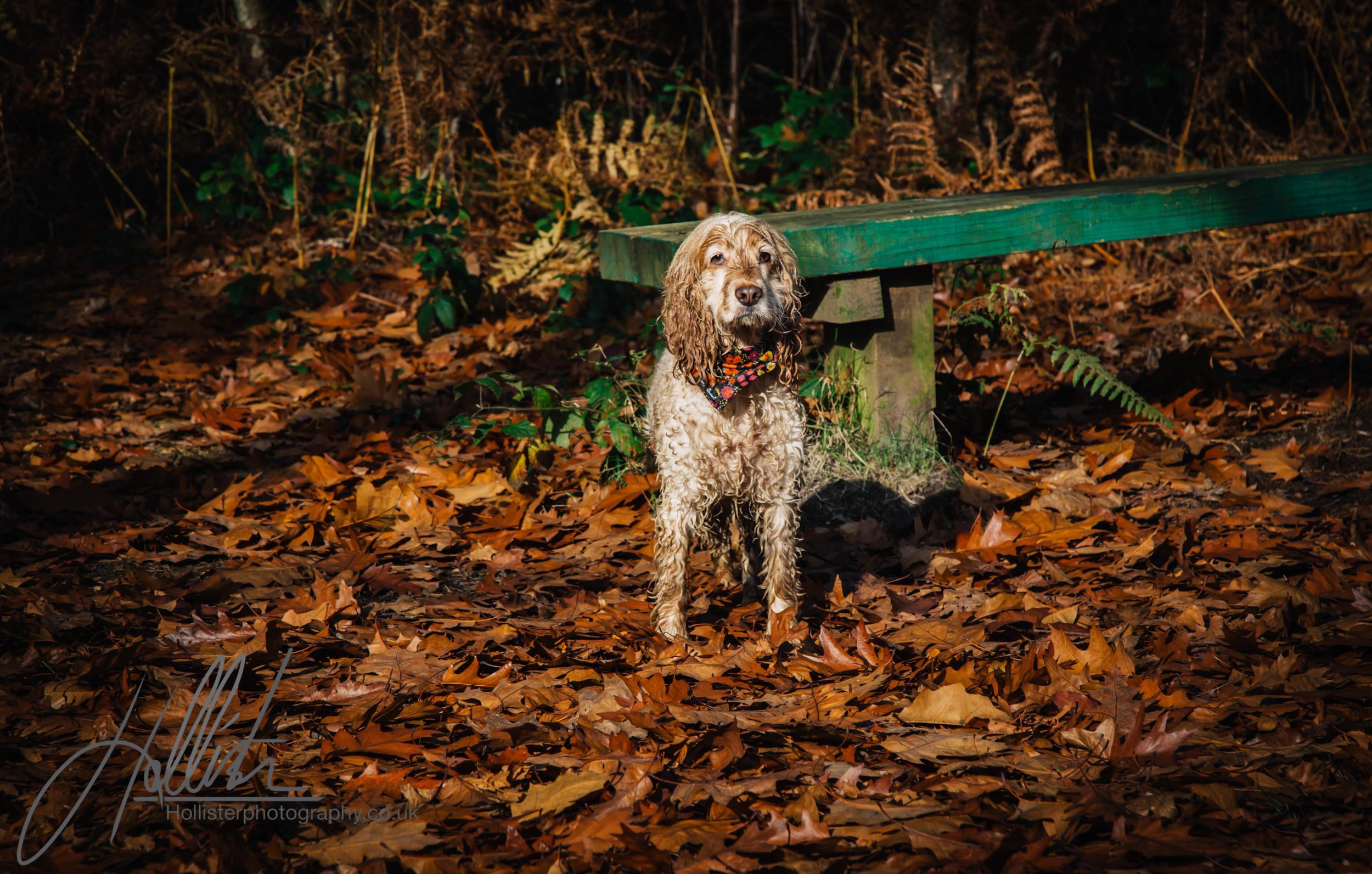 Hollisterphotography ABBY CLOWES WOOD DOG WALK-70.JPG