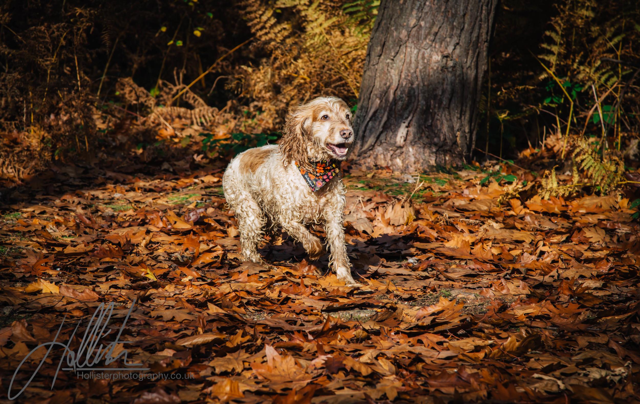 Hollisterphotography ABBY CLOWES WOOD DOG WALK-73.JPG