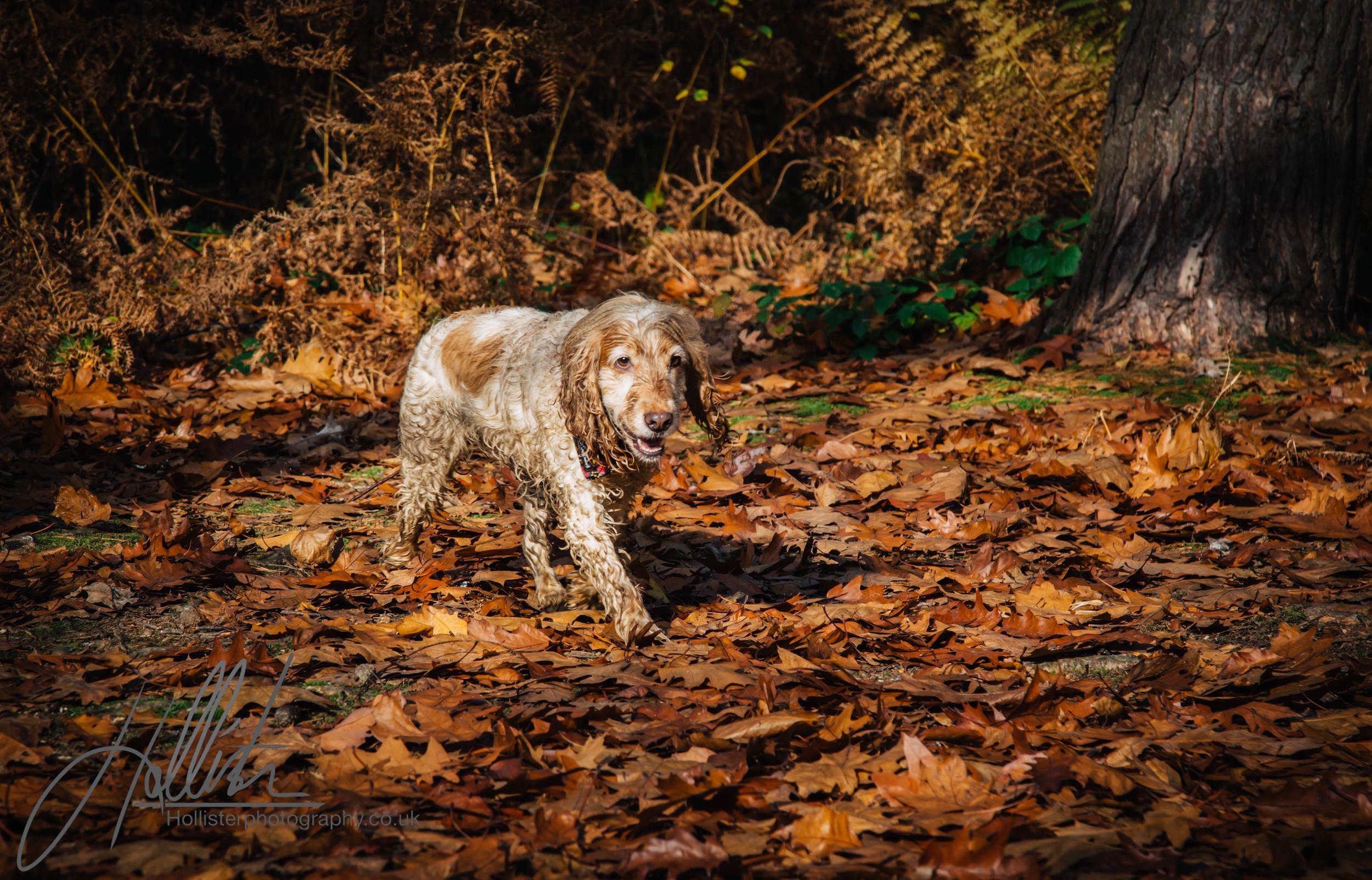 Hollisterphotography ABBY CLOWES WOOD DOG WALK-76.JPG