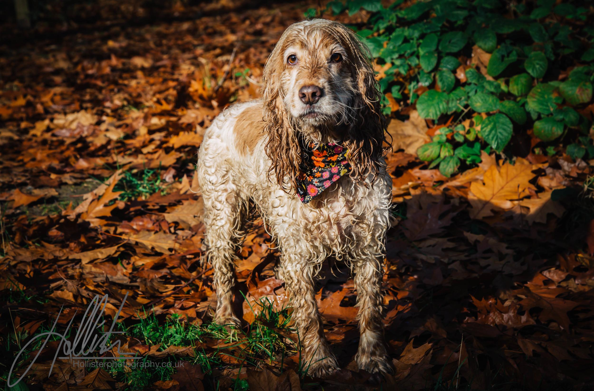 Hollisterphotography ABBY CLOWES WOOD DOG WALK-81.JPG