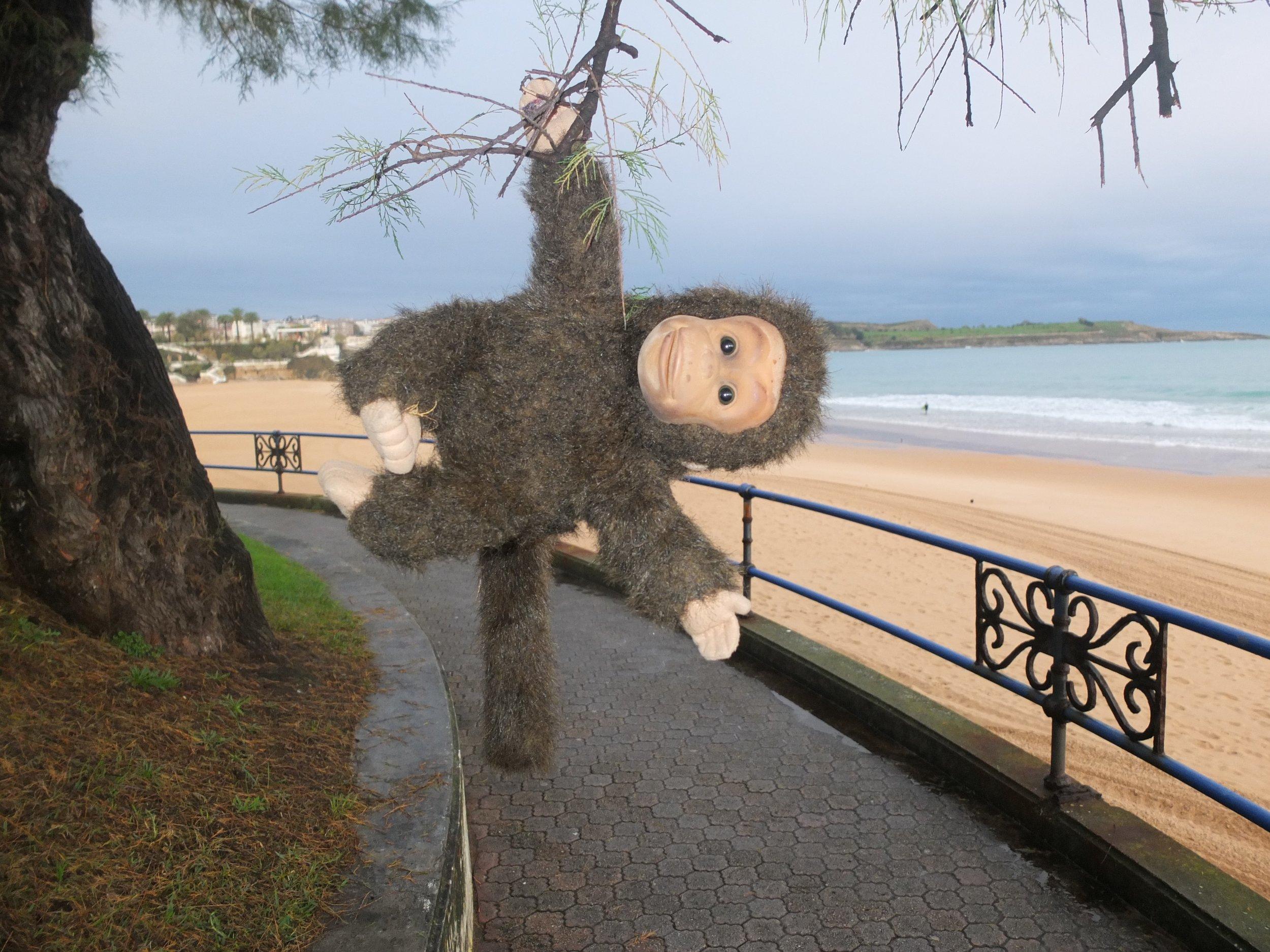 Charlie swinging through the trees on Santander beach....