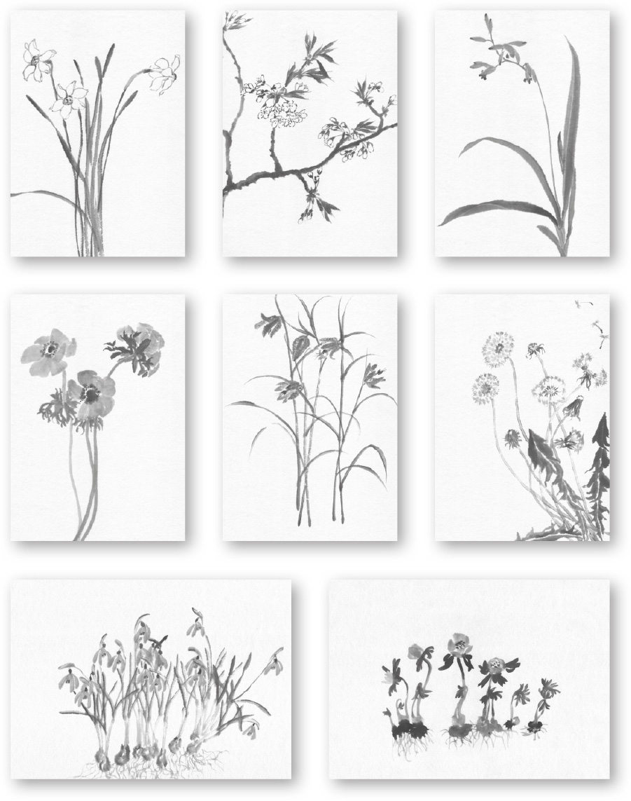 Serie 3 «Frühlingsblumen»