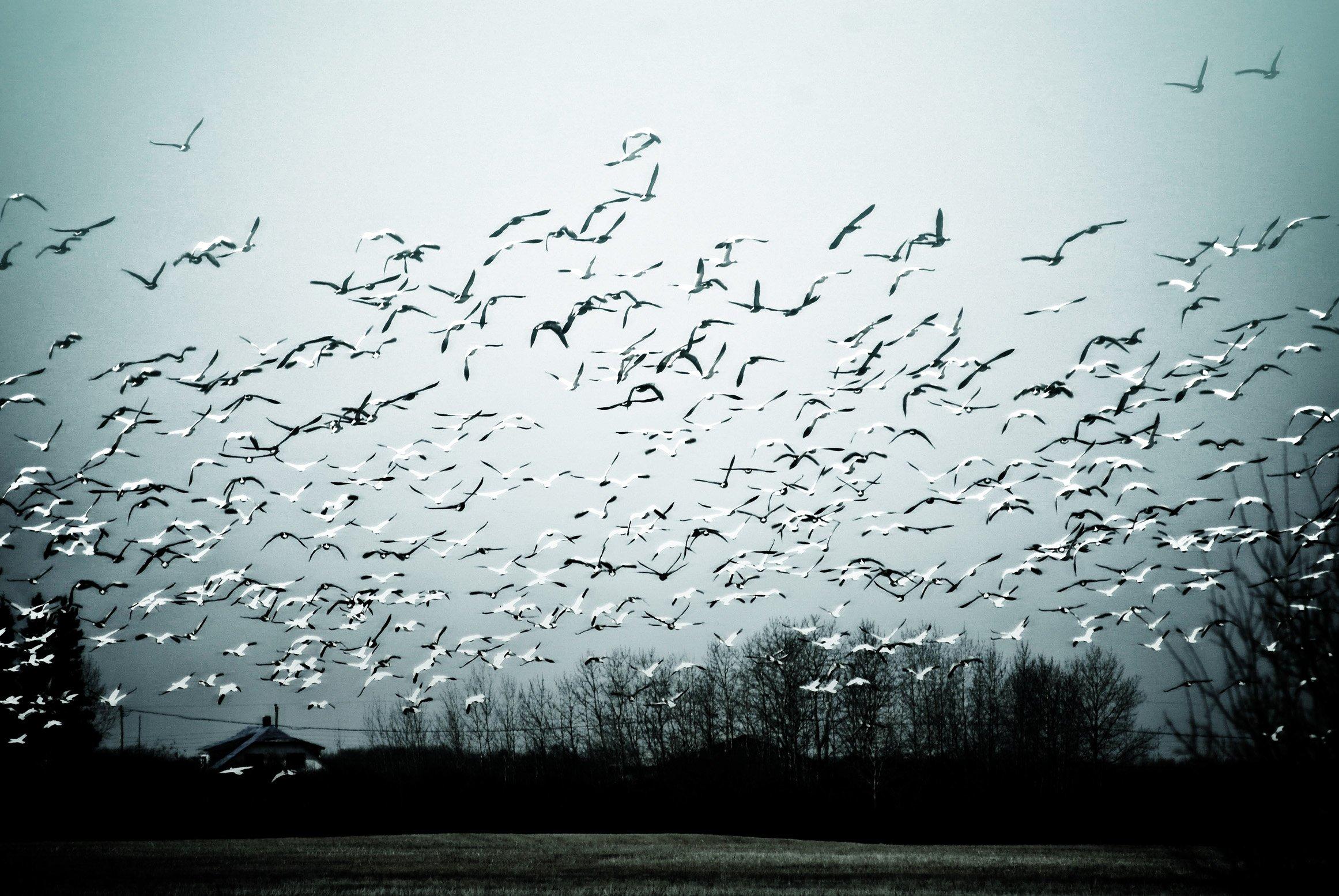 """ The Birds "", por  AP&F . Licencia    CC BY-NC-SA 2.0"
