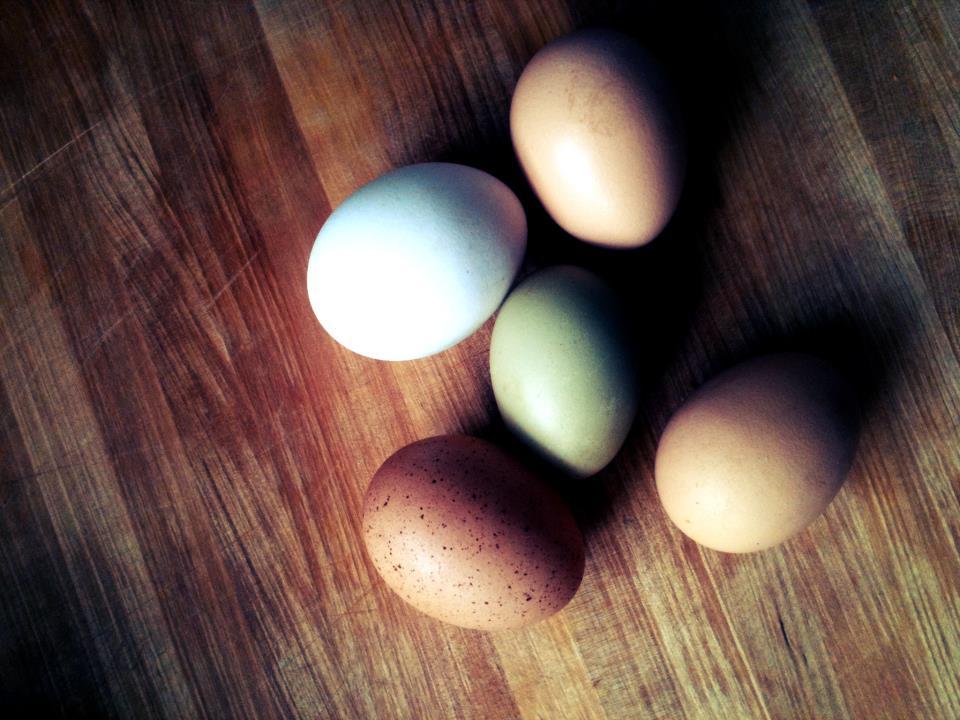 Eggs_new.jpg