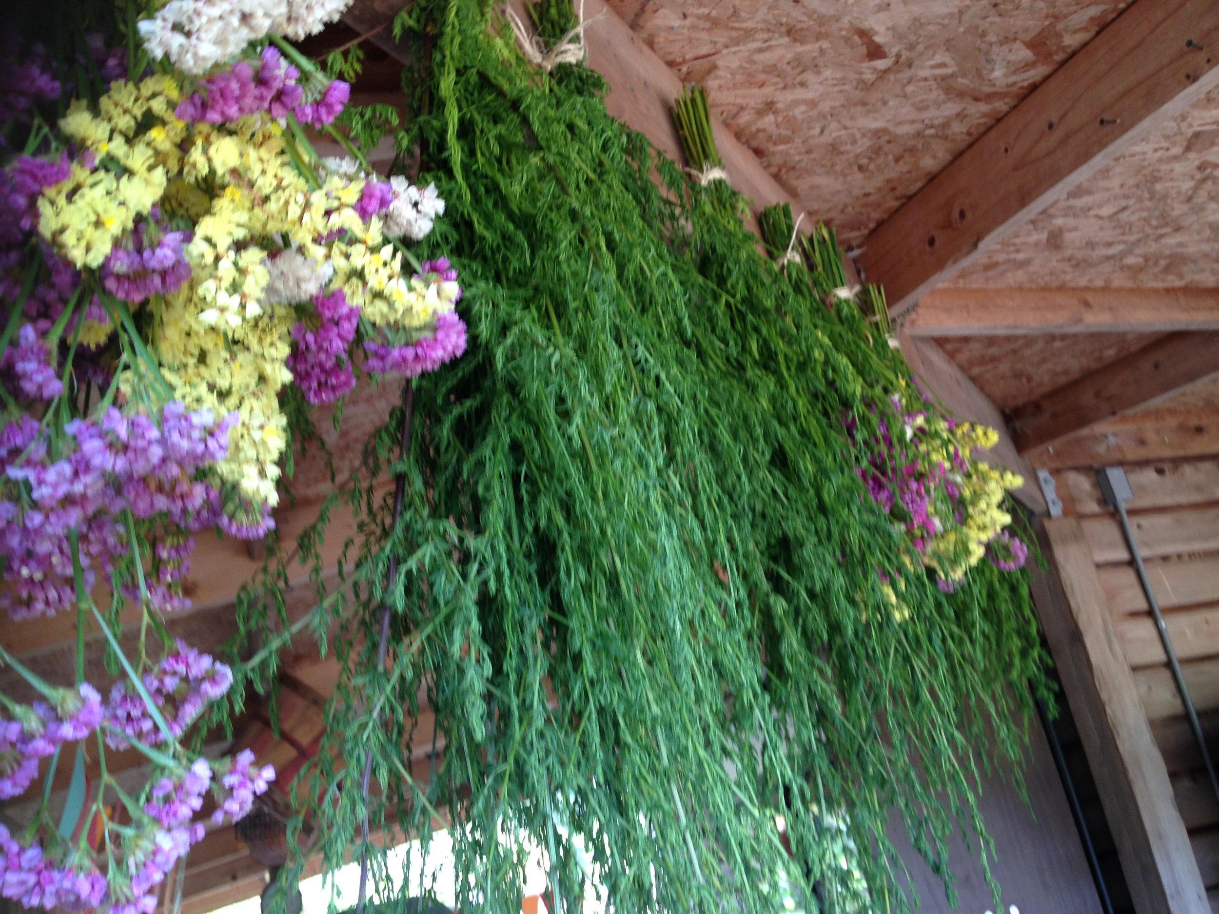Hanging Herbs.jpg