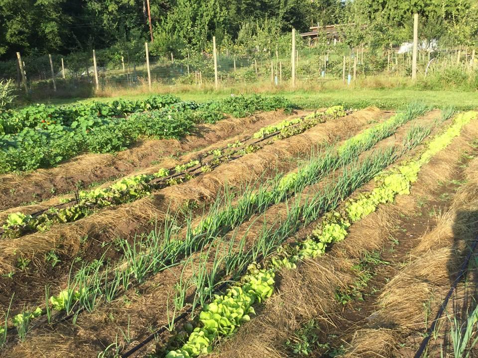 Polyculture at FBF.jpg