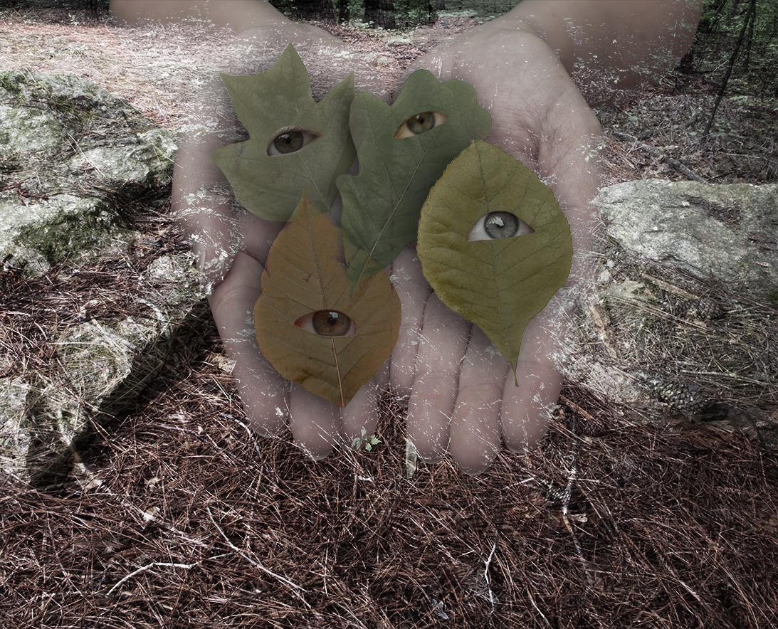 leaf_eyes.jpg