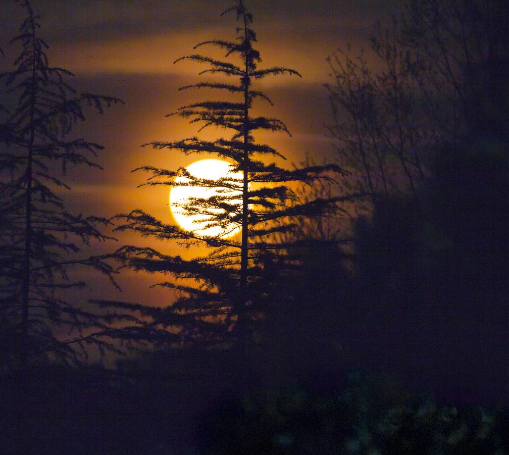 full_moon_rising.jpg