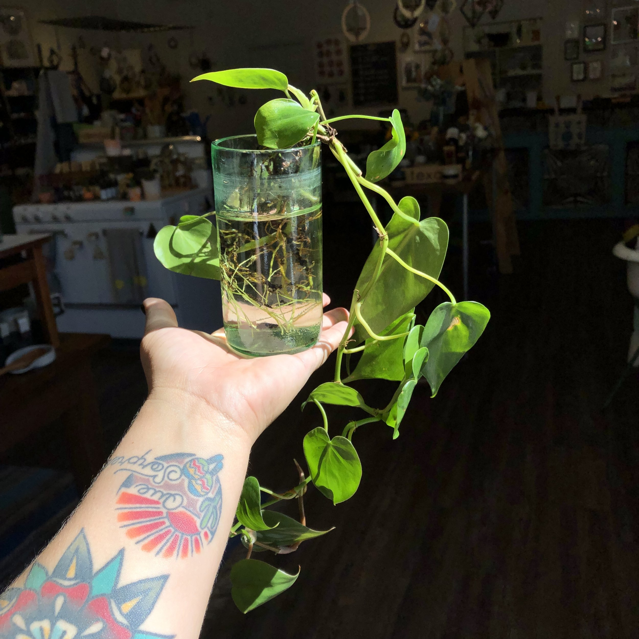 The first clipping we added to our community Pothos