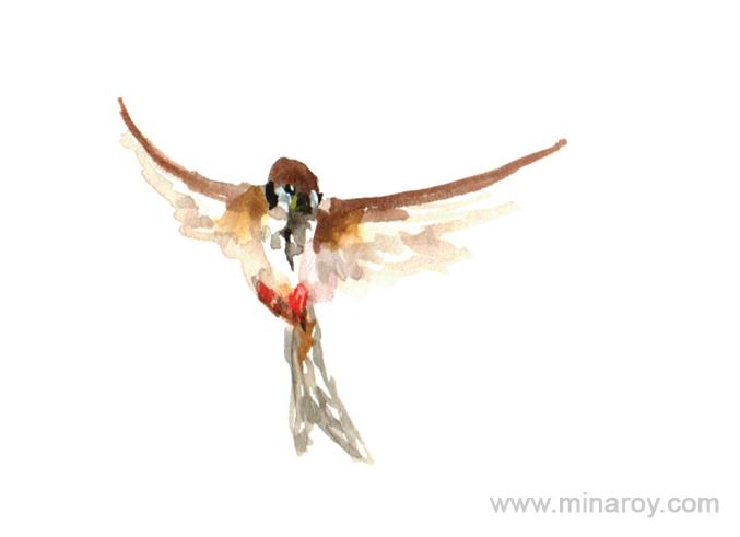 MinaRoy_Paintedbird_RGB_023.png