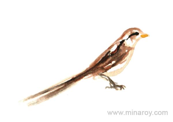 MinaRoy_Paintedbird_RGB_025.png