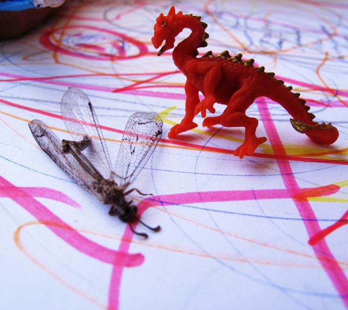 dragon fly square web.jpg