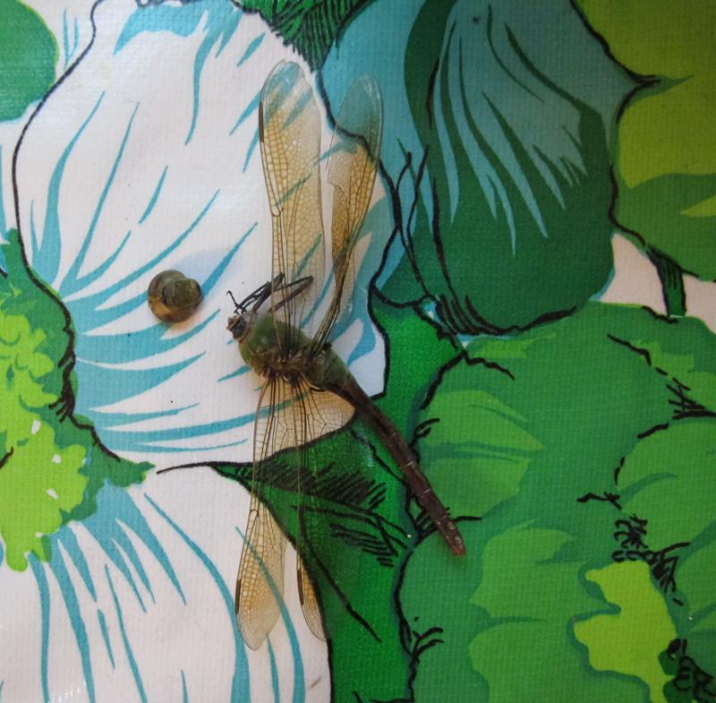 dragon fly flower web.jpg