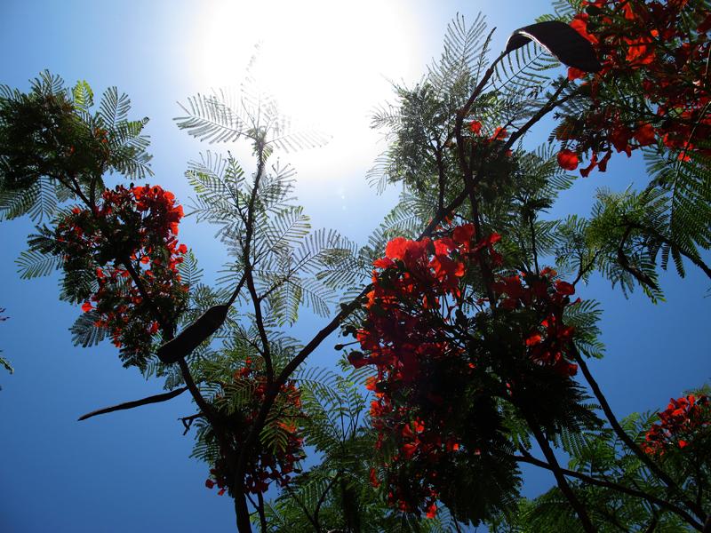 into the sun web.jpg
