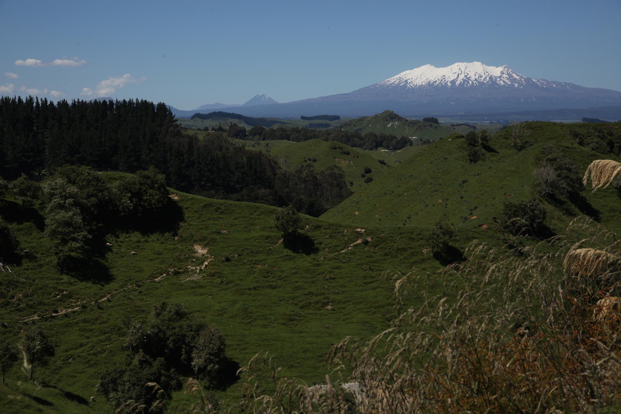 Forgotten World Highway New Zealand_5.jpg