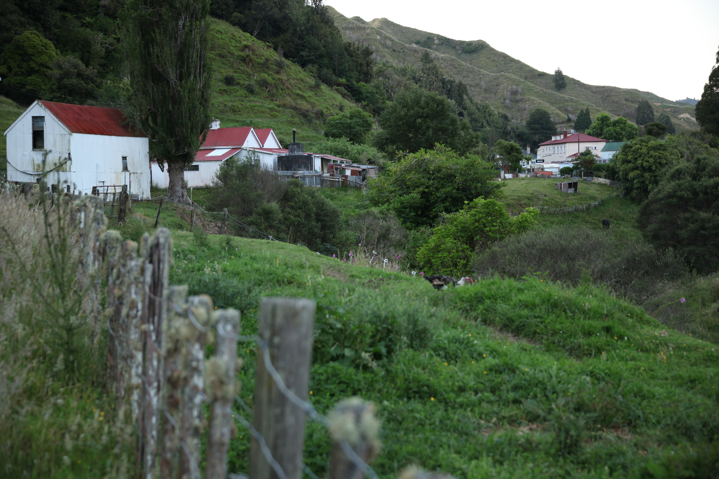 Forgotten World Highway New Zealand_7.jpg