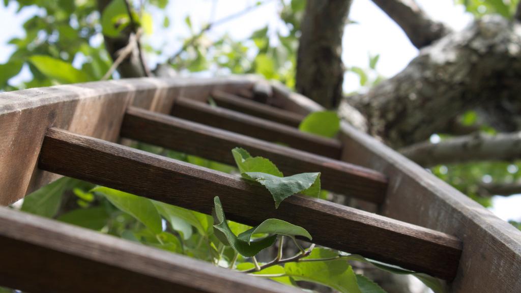 tree-and-ladder-4.jpg