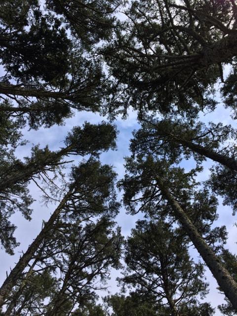 KMarshello_DiscoveryTrail_Trees.jpg