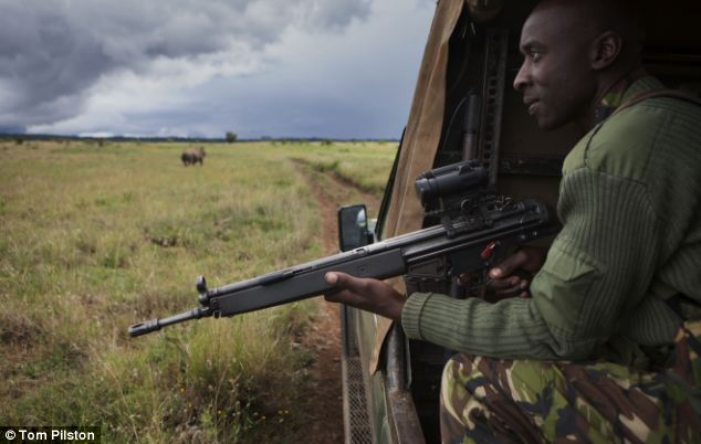 A warden guards rhinos from poachers on the Lewa wildlife conservancy