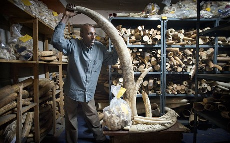 Teressa Bayeta inside the ivory vault Geoff Pugh