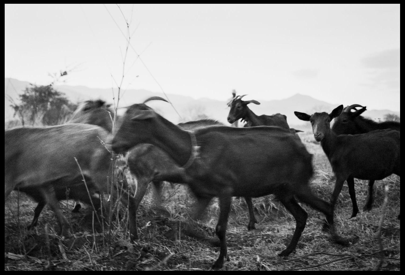 Goat herder Oaxaca, Mexico, 2005