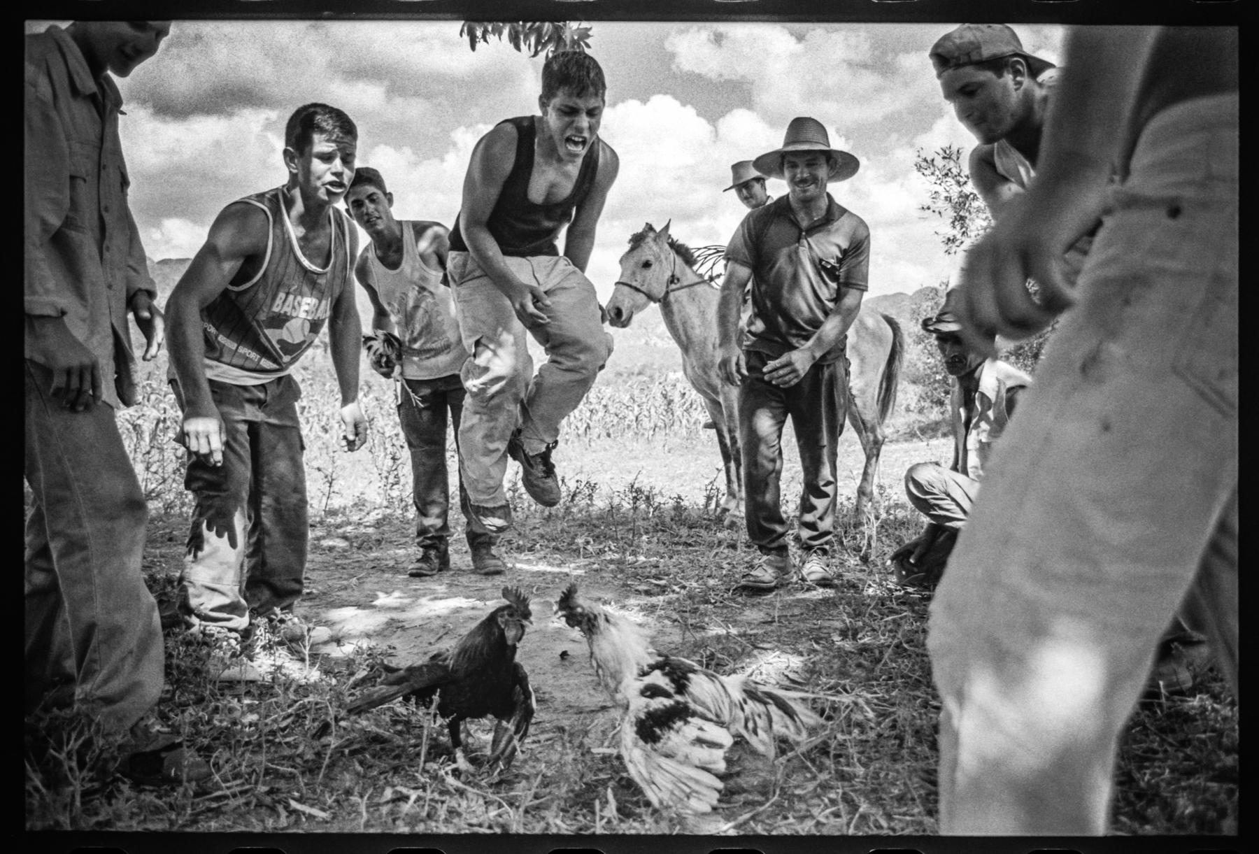 Cockfight Viñales, Cuba, 2003
