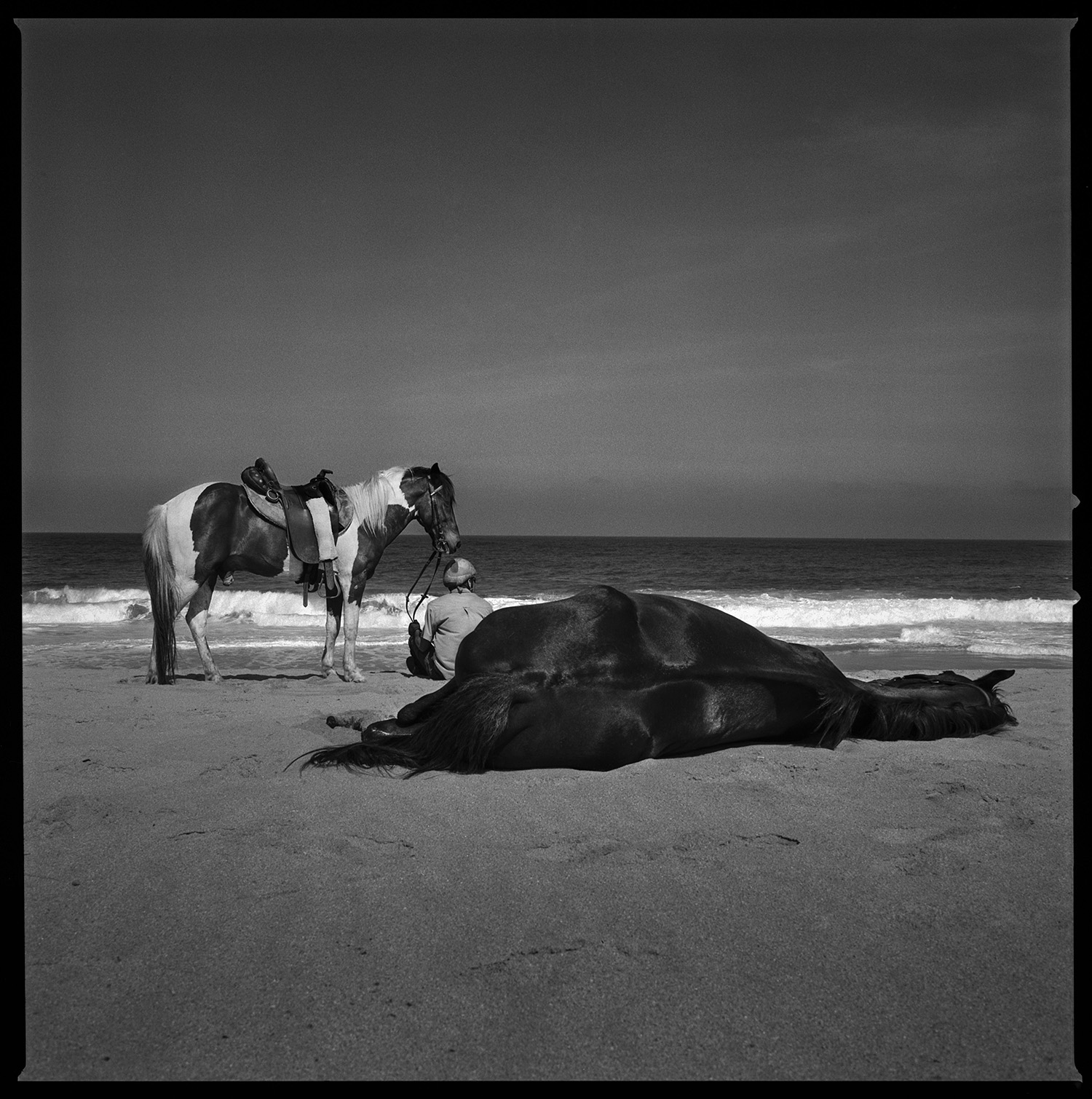 Man with his two horses on the beach Todos Santos, Mexico 2015