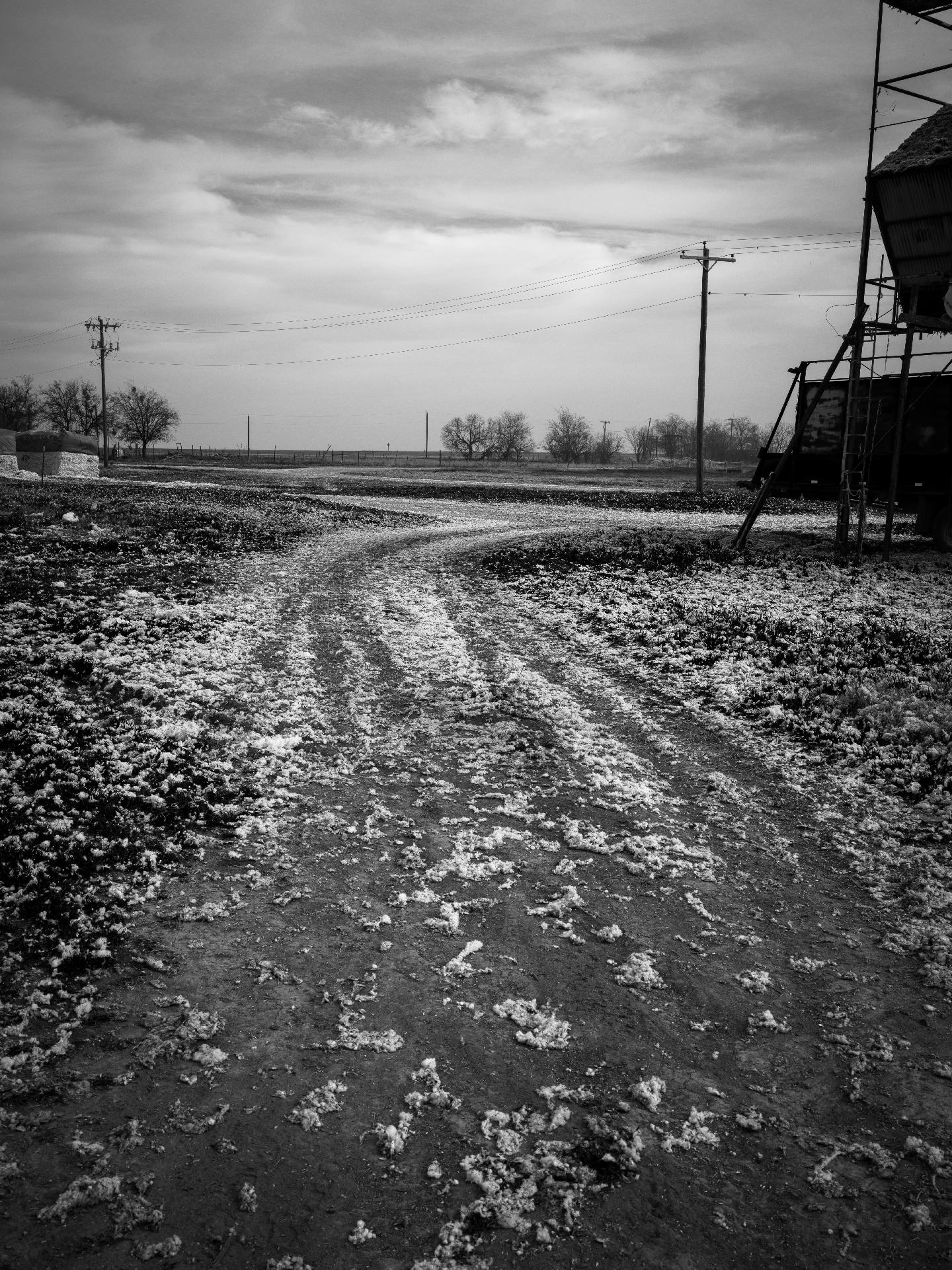 Road with cotton during the harvest Norton County, Texas 2016   Made with Hasselblad X1D medium format digital camera