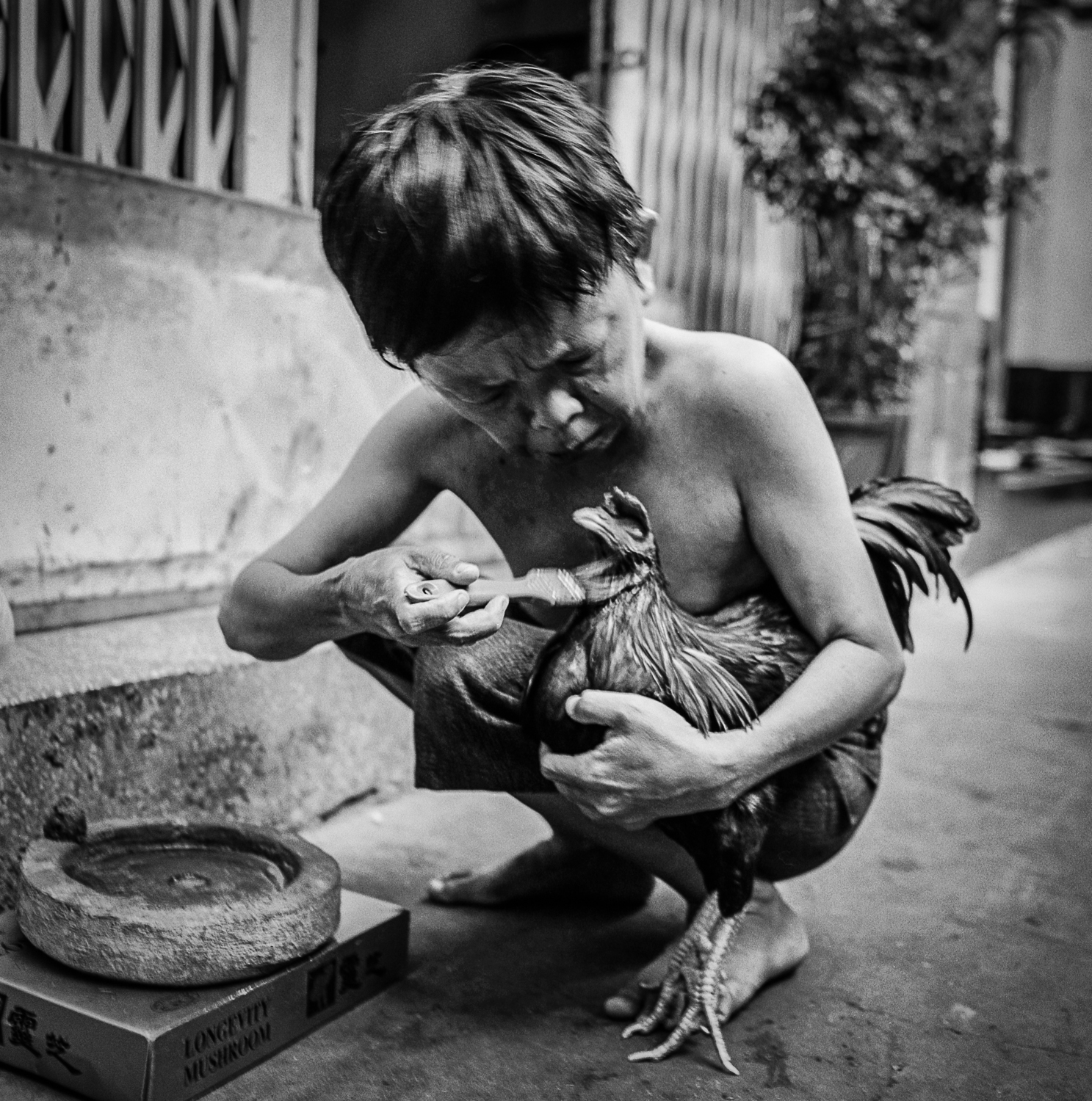 Man painting his rooster with red paint Ho Chi Minh City   Made with Hasselblad 501c with Kodak Tri-X 400 b&w film