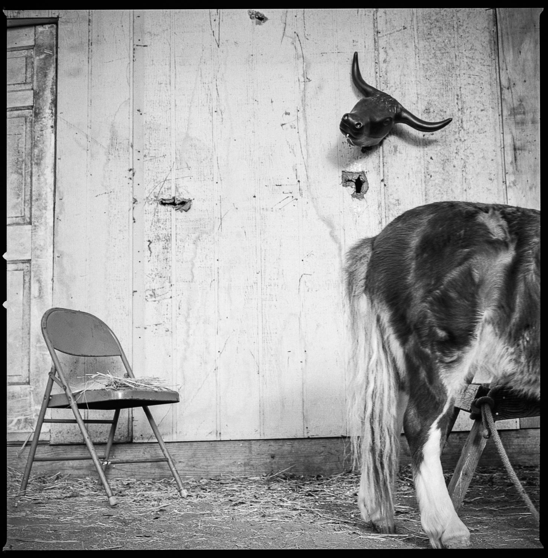 Backyard in East Austin Austin, Texas 2005  Made with Hasselblad 501c with Kodak Tri-X 400 b&w film