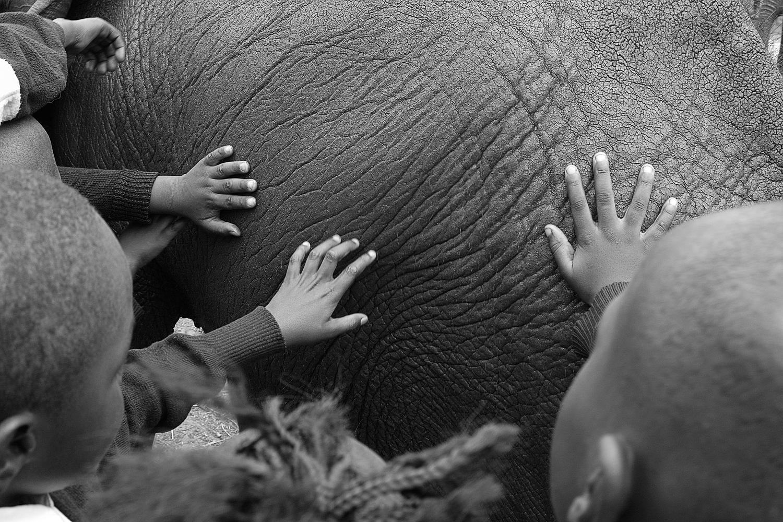Kids touching an elephant Nairobi, Kenya 2014   Made digitally with Nikon D800