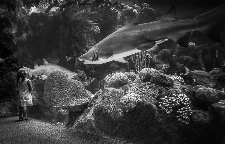 Girl at the aquarium Tampa Bay, Florida 2014   Made digitally with Nikon D800