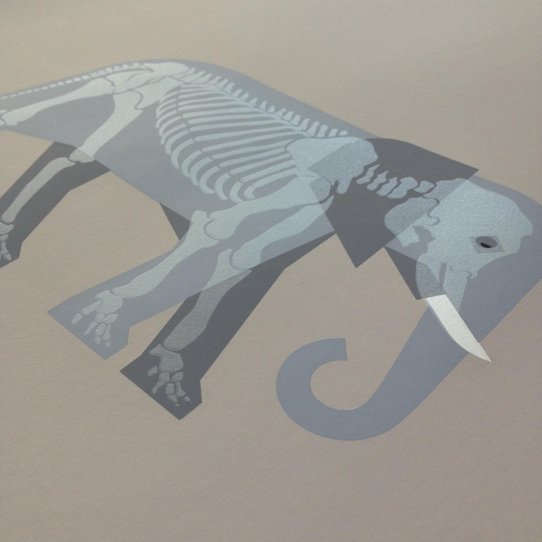 Elephant-skeleton-4.jpg