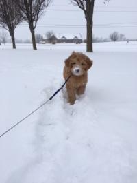 snow maggie.jpg