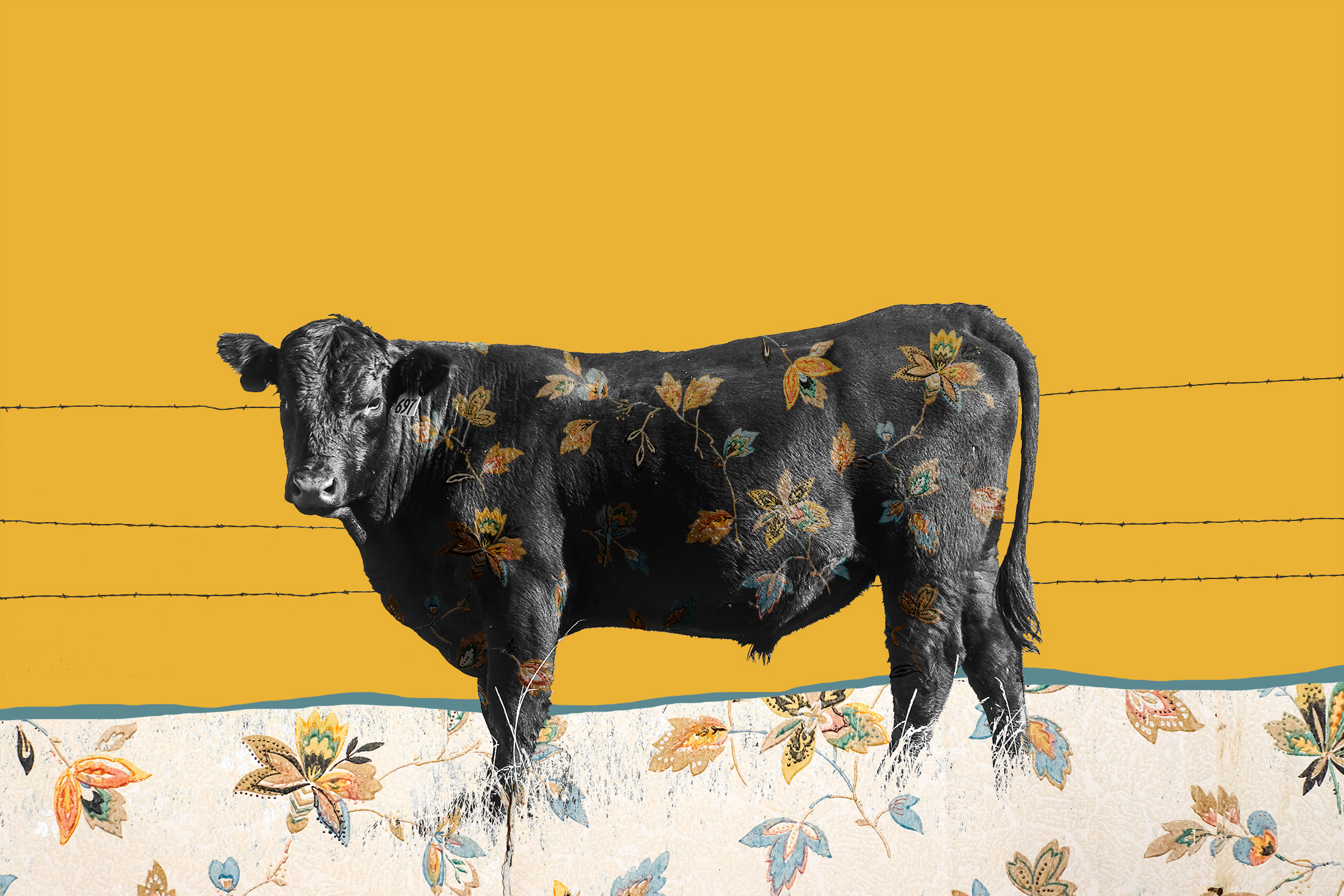{ Calf No. 1 }  pictured is a calf from a Montana ranch. The floral pattern is a photograph I made of vintage wallpaper from the Kramer Dress Shop, built in 1863, in the town of Virginia City, Montana. Virginia City is a National Historic Landmark and began in 1863 when gold was discovered in Alder Gulch.
