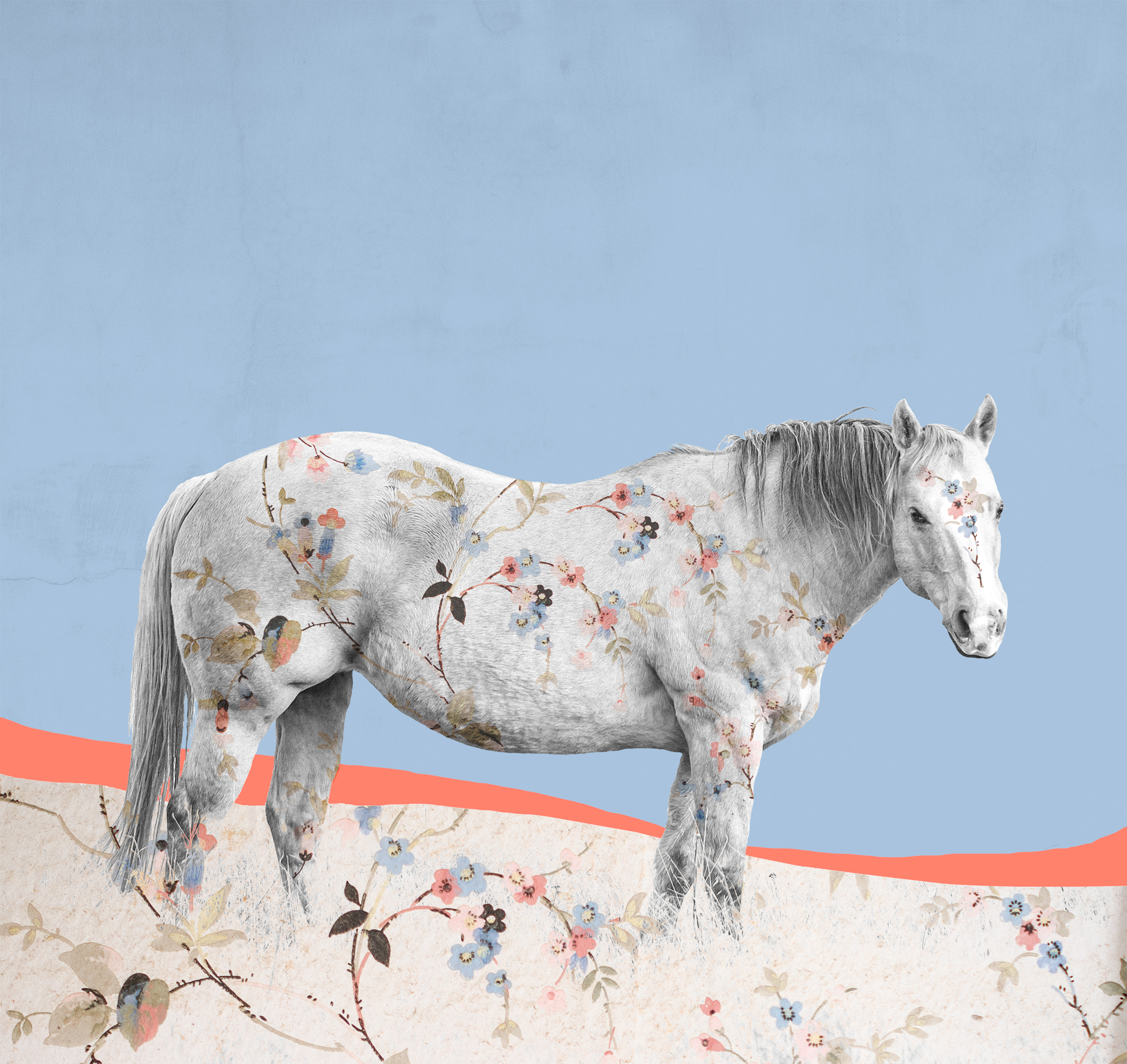 { Horse No. 22  } Pictured is a ranch horse from a ranch outside Yellowstone National Park. The pattern is a photograph I made of vintage wallpaper in an abandoned home in the ghost town of Bannack, Montana. The Roe/Graves House was built in 1866 and in addition to living there, William Roe operated a general store and meat market from the home. Roe was one of the Vigilantes who captured and hung the crooked Sheriff Henry Plummer and members of his secret gang, known as Road Agents, in 1864. The solid colored background is the painted walls of the abandoned Hotel Meade, also in Bannack, which was founded in 1862 after gold was discovered there.