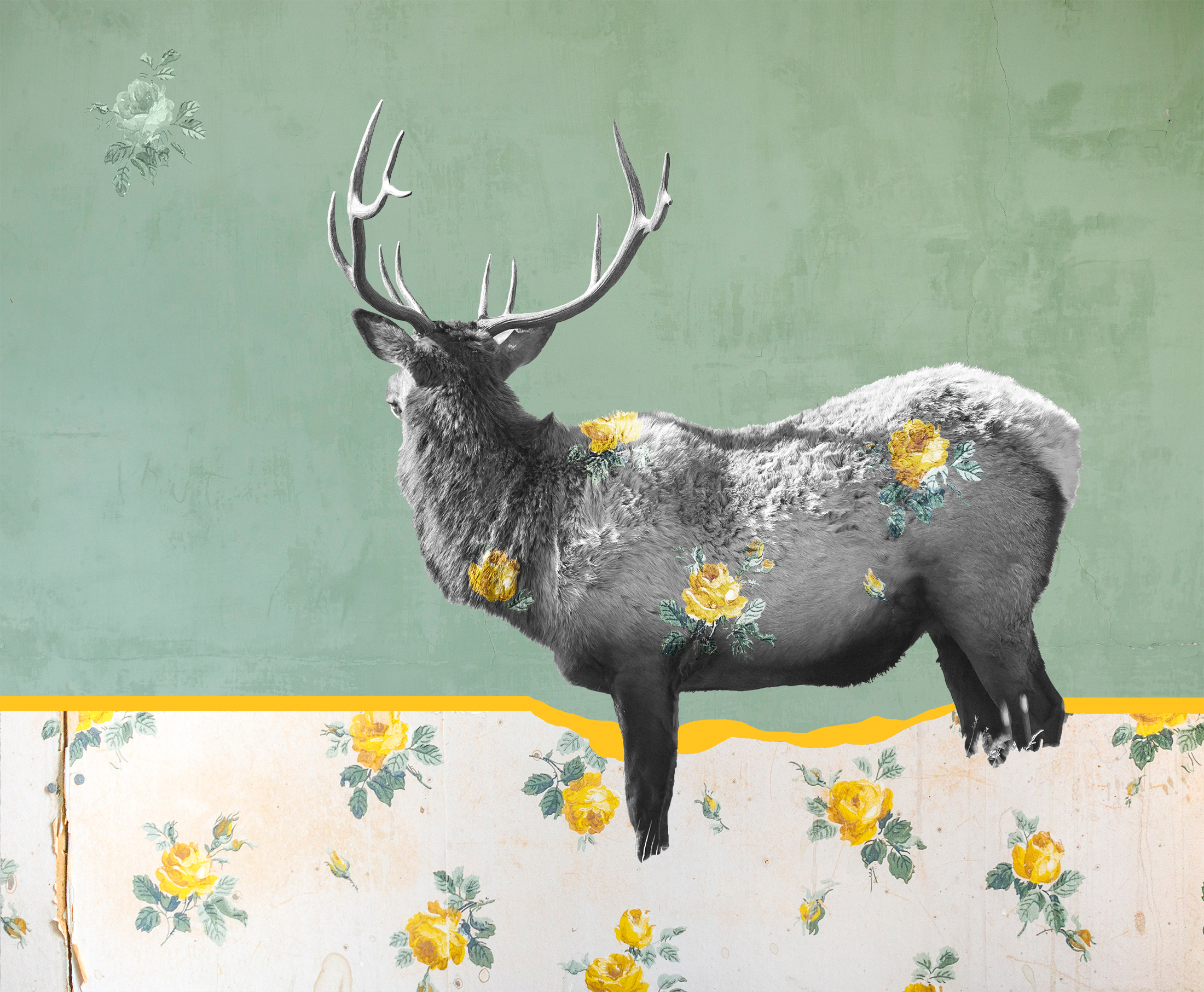 { Elk No. 1 }  Pictured is a bull elk I photographed in Yellowstone National Park. I photographed this wallpaper in the ghost town of Bannack, Montana in the Greater House. Augustus Graeter arrived in Bannack from Nebraska in 1862 and built this home shortly thereafter. Through the years additions were made as various families continued to live there even as the town itself was in decline. The solid colored background is the painted plaster walls of the abandoned Hotel Meade, also in Bannack, which was founded in 1862 after gold was discovered along Grasshopper Creek. The town was the first Capitol of the Montana Territory.