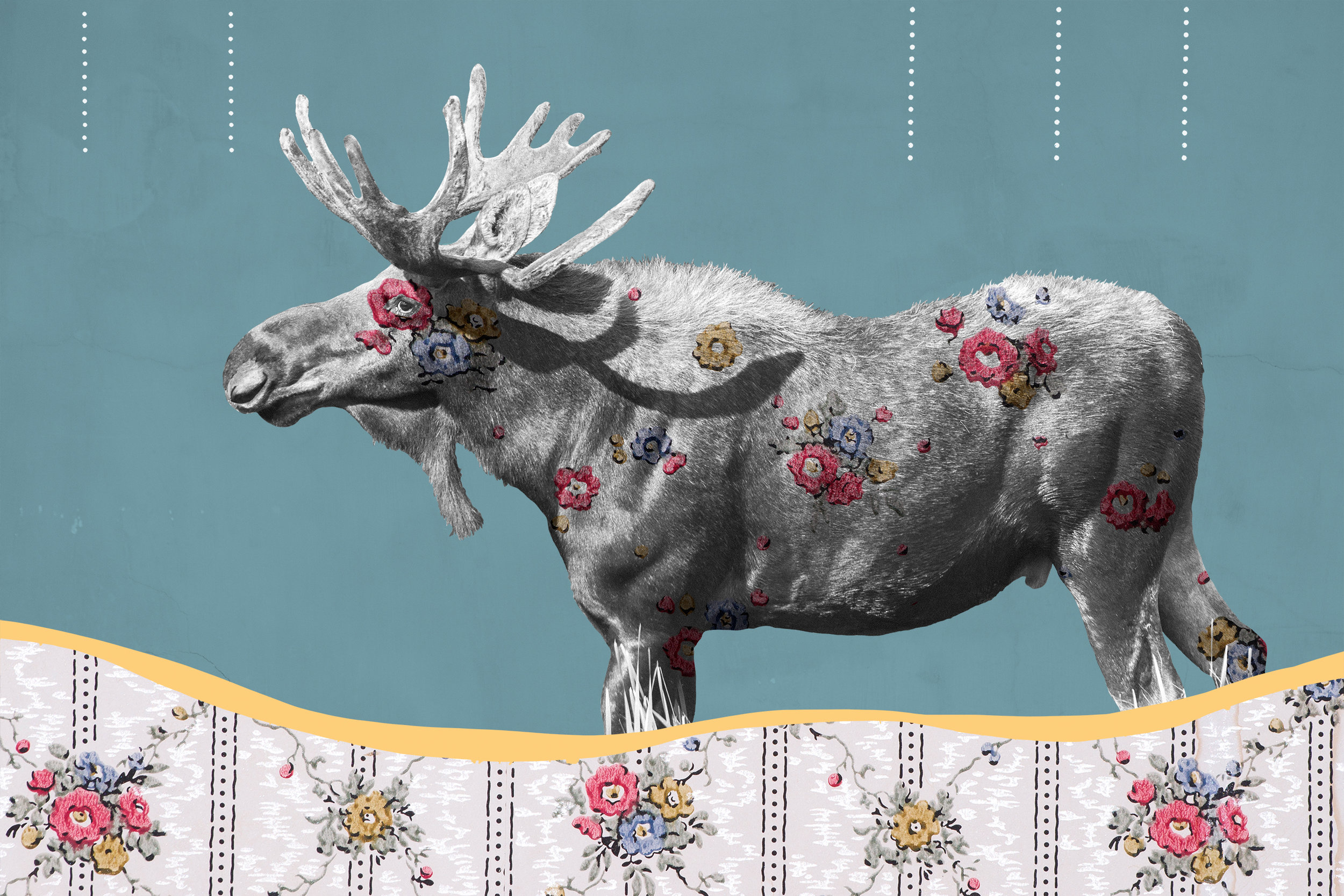 """{ Moose No. 2 }  I photographed moose in Montana's Madison Valley. This vintage wallpaper I photographed in the Daly Mansion in the Bitterroot Valley of Montana. The mansion served as the summer residence of Margaret Daly, widow to """"Copper King"""" Marcus Daly. The mansion was completed in 1910 and this wallpaper is original to that period."""