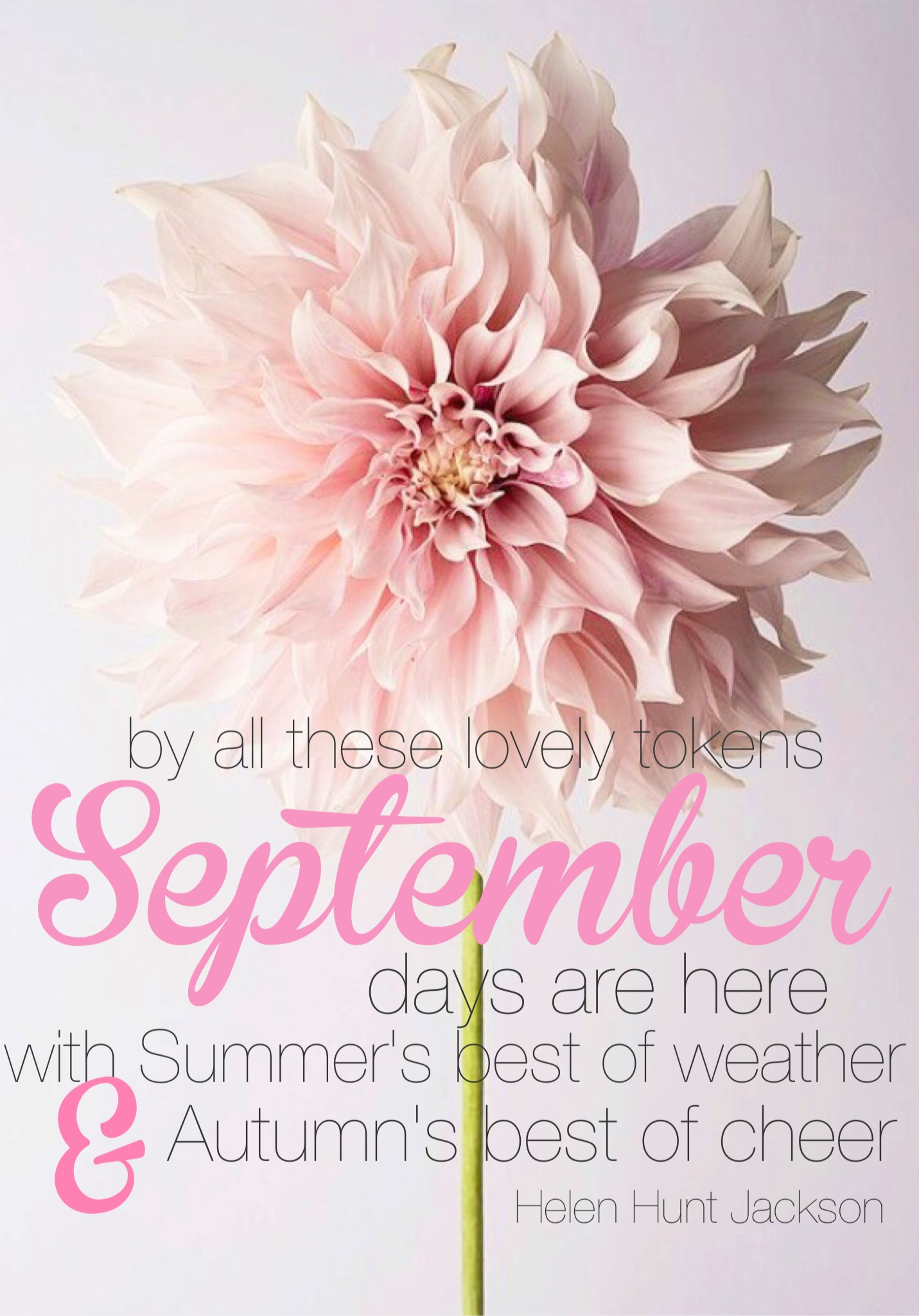 September Quote. September. Helen Hunt Jackson. Dahlia. Pretty. Pink flower. Pretty flower.